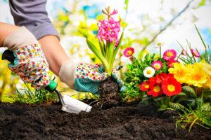 Gärtner pflanzt Frühblüher ein - Gartenträume Magdeburg